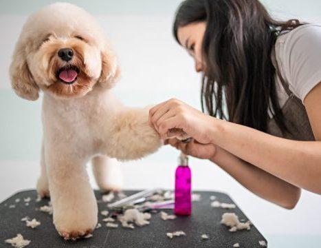 Supergroomers Pet Academy.